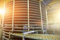 大工业被自动化围绕传动机线或传送带机器在面包店或糖果店食物工厂、曲奇饼和蛋糕生产 免版税库存照片