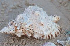大巧克力精炼机壳坐沙子在海滩 免版税库存图片