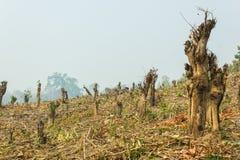 大幅度削减并且烧耕种,雨林被切开和被烧种植 库存照片