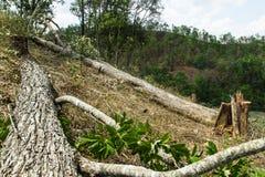 大幅度削减并且烧耕种,雨林被切开和被烧种植 免版税库存图片