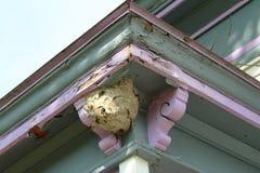 大张纸黄蜂巢附有一个老房子的外部壁角房檐 库存图片