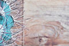 大弯曲的仙人掌脊椎特写镜头 与长的钉和针的绿色仙人掌 木背景破裂的老纹理的葡萄酒 复制空间 免版税库存图片