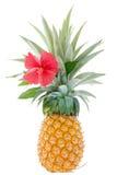大成熟菠萝,从庭院的裁减有红色木槿的 免版税库存图片