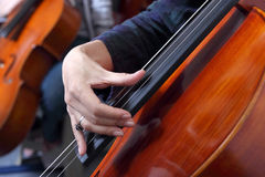 大提琴pizzicato 库存图片