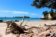 大教堂小海湾新西兰 免版税库存图片