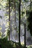 大教堂树丛薄雾上升 免版税图库摄影
