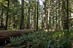 大教堂森林树丛 库存照片