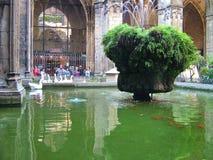 大教堂的露台在巴塞罗那,西班牙 图库摄影