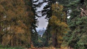 大教堂通过树在秋天 库存照片