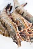 大新鲜的大虾原始的老虎 库存照片