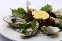 大新鲜的牡蛎 图库摄影