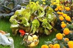 大新鲜的生长沙拉在有其他菜的庭院里 免版税图库摄影
