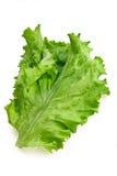 大新鲜的绿色叶子沙拉 免版税库存照片