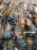 大新鲜的虾,冻和在超级市场卖 库存照片