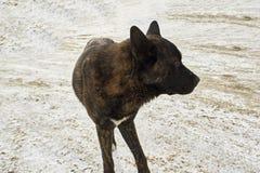 大无家可归的狗 免版税库存照片