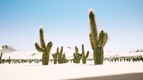大日出时间间隔在沙漠的有孤立仙人掌剪影的在前景的 皇族释放例证