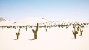 大日出时间间隔在沙漠的有孤立仙人掌剪影的在前景的 库存例证