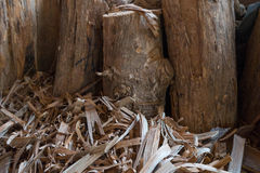 大日志在木头和尘土附近的区域 库存图片