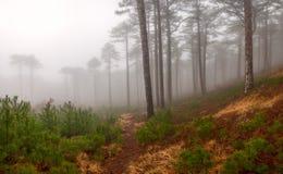 大有雾的木头 库存照片