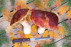 大未加工的cepes和叶子在一张木桌上 库存图片