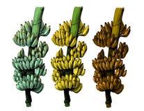 大束在一个厚实的分支的香蕉 图库摄影
