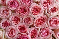 大束玫瑰 图库摄影