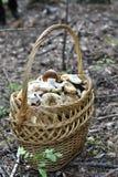 大柳条筐用蘑菇 库存照片