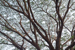 大树分支与淡蓝的天空的在背景中 库存图片