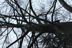 大树和分支作为染黑象恐怖 免版税图库摄影