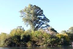 大树和植被在湖 图库摄影