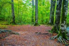 大树在一个森林里在秋天Plitvice湖克罗地亚/公园 库存照片