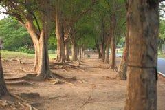 大树在公园在城市 库存图片