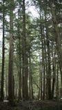 大树在森林里 库存照片