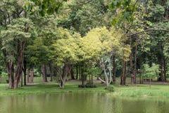 大树在水包围的公园 库存照片