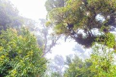 大树在热带森林里 免版税库存照片