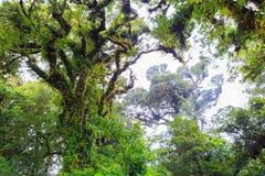 大树在热带森林里 免版税库存图片