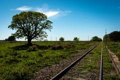 大树在阳光下在被放弃的火车轨道旁边 免版税库存照片