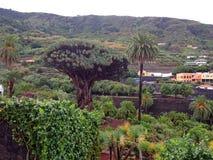 大树在nartional公园 免版税图库摄影