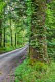大树在Smokey山国家公园构筑一条乡下公路 图库摄影