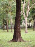 大树干大树皮概略的纹理 库存照片
