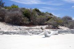 大树干从海洗涤了和各式各样, Amoronia橙色海湾,印度洋,在马达加斯加北部 库存图片