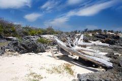 大树干从海洗涤了和各式各样, Amoronia橙色海湾,印度洋,在马达加斯加北部 免版税库存图片