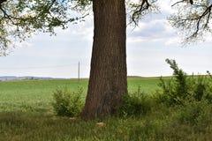 大树干 免版税库存照片