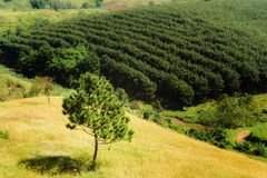 大树是在草甸的一棵唯一树 免版税库存照片