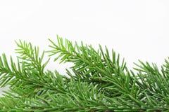 大树枝圣诞树 免版税库存图片