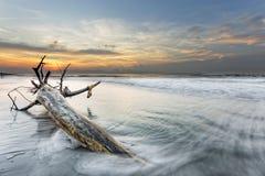大树枝在海洋 图库摄影