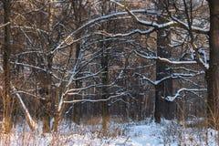 大树枝在雪盖的森林里在snowfal以后 库存照片