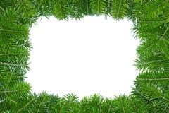 大树枝框架杉木 免版税图库摄影