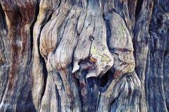 大树树干木头纹理 免版税库存照片