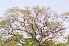大树梢。 库存照片